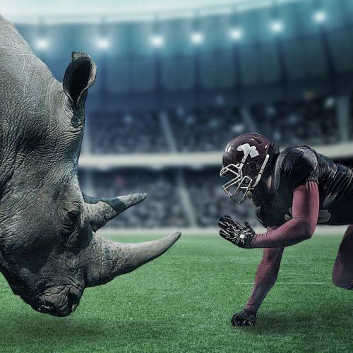 futbolista konfrontuje sie z nosorożcem